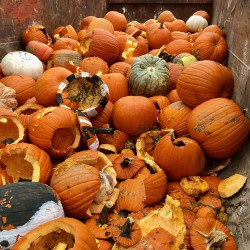 Pumpkin Composting Event - Pumpkin Composting Event 2 - 3