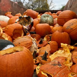 Pumpkin Composting Event - Pumpkin Composting Event 2 - 4