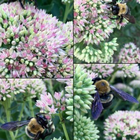 Bee with purple wings on flowers collage - photo print