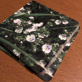 Blooming Spiderwort on Mother's Day - coaster set