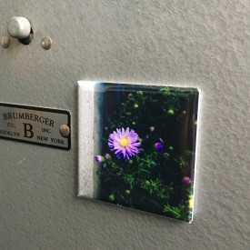 Here's a flower to get your day started - 2 inch magnet