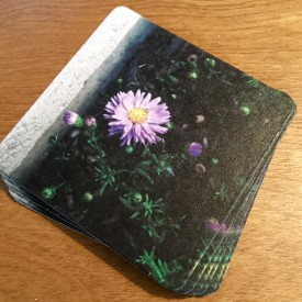 Here's a flower to get your day started - coaster set