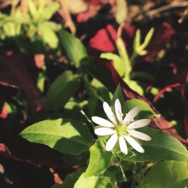 Little white Fall flower - photo print
