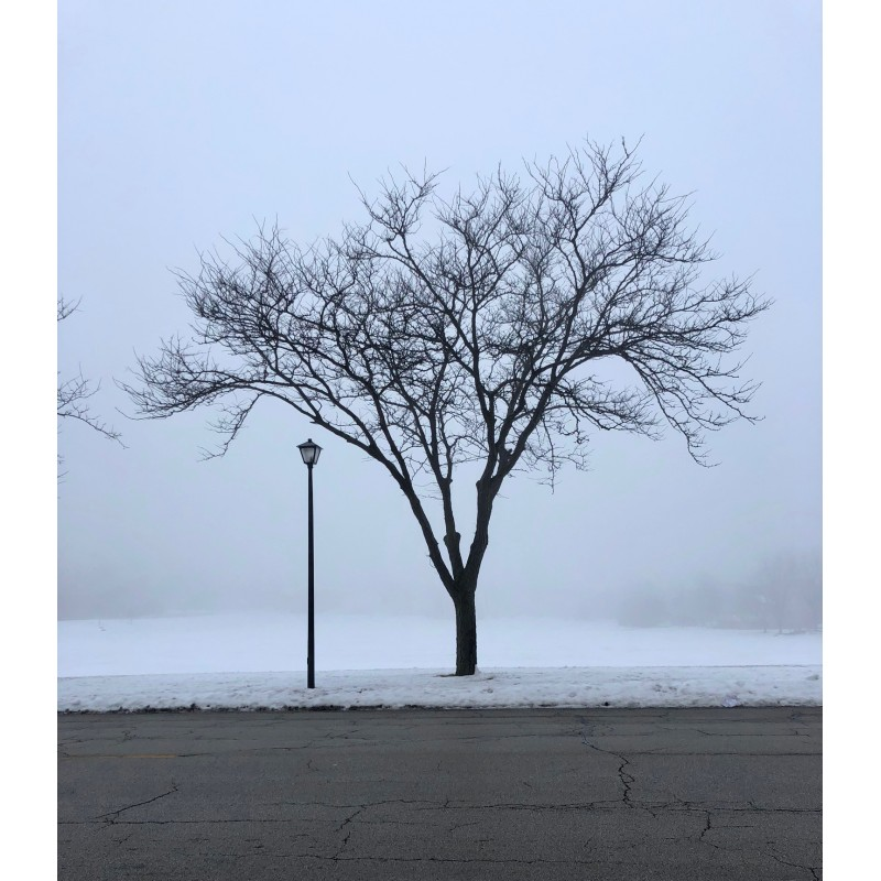 Foggy this morning in Geneva - photo print - Primary Image
