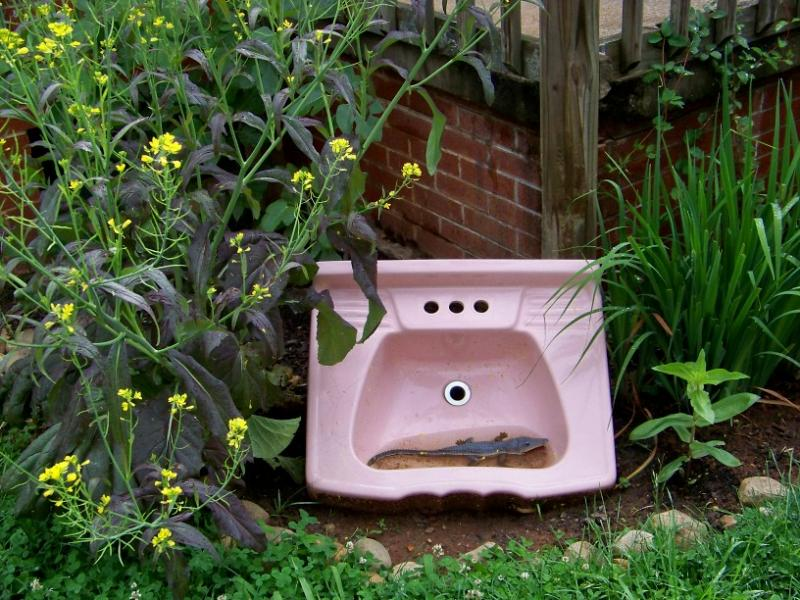 outdoor pink sink with gator