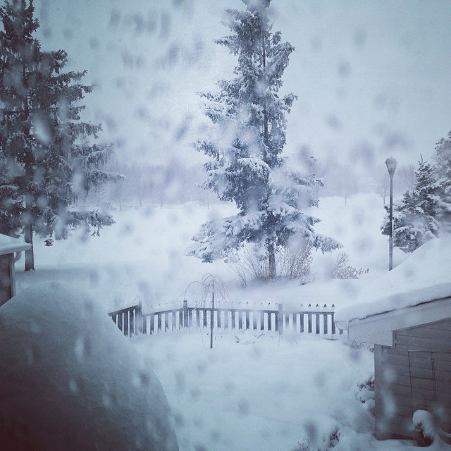 """""""It's snowing"""" photo for 2015"""