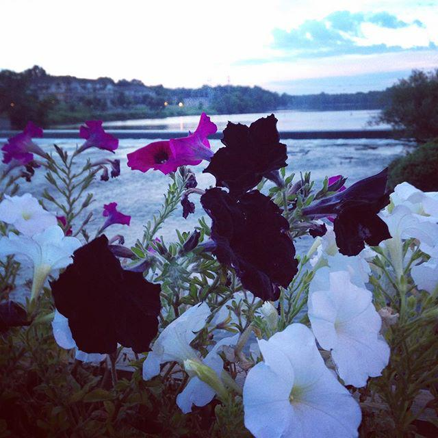 Black flowers along the river to match my soul