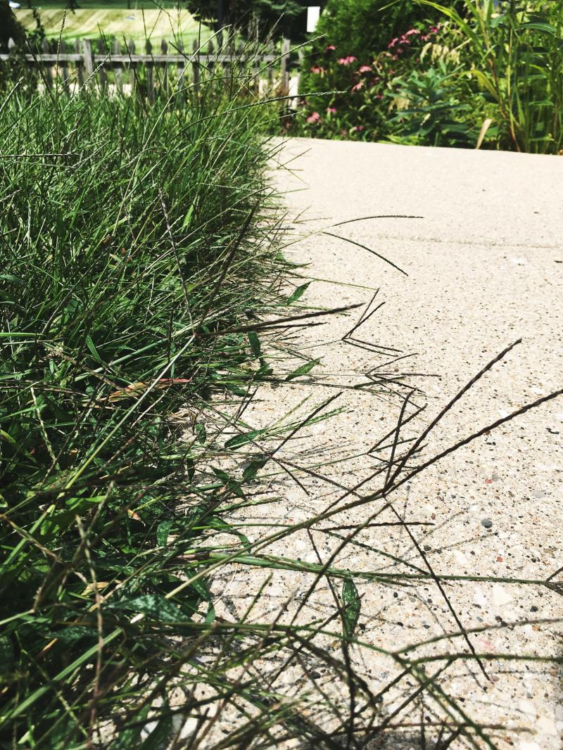 Grass is taking over the sidewalk