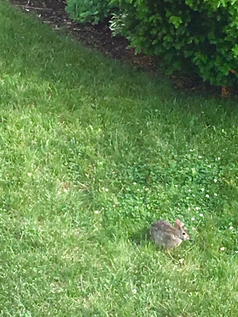 Buns frolicking in the clover