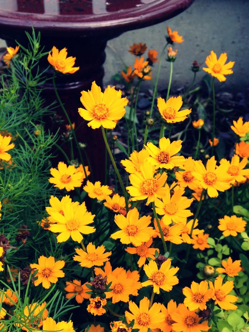 Orange flowers for ya because you guys are the best