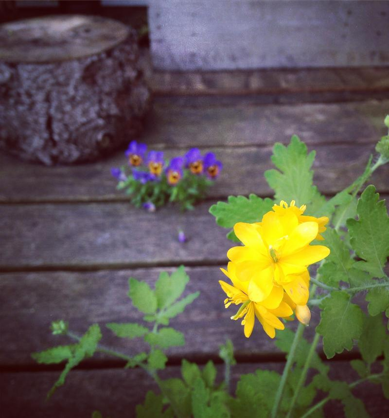 Yellow flowers on the deck