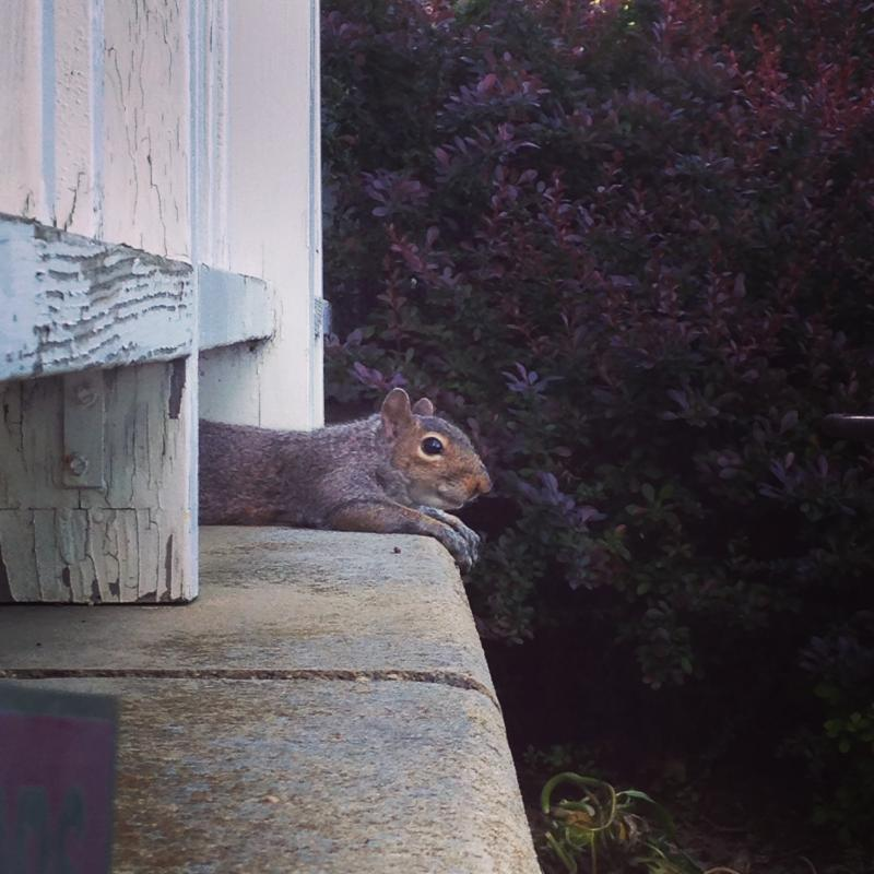 squirrel chilling after some eats