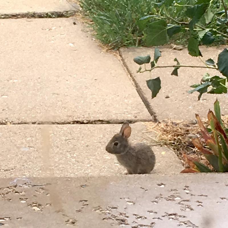 babiest of bunnies