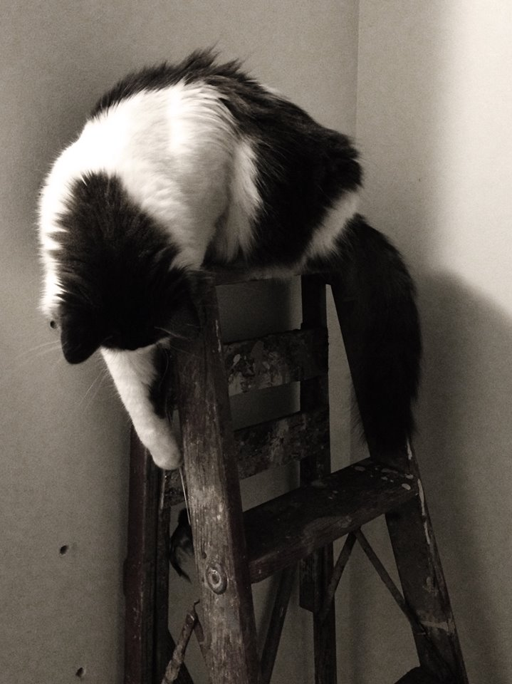 Cat loves the ladder