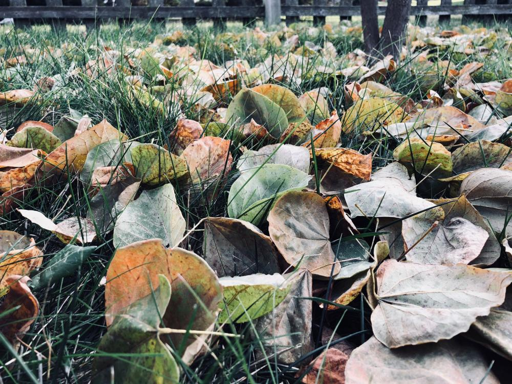 Leaves needing raked