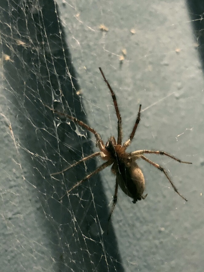 Outside spider can stay outside