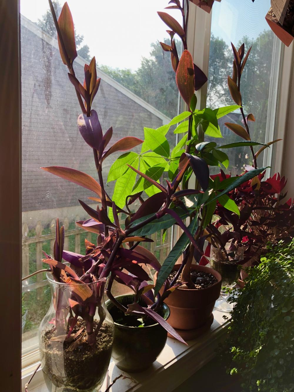 Morning potted plants