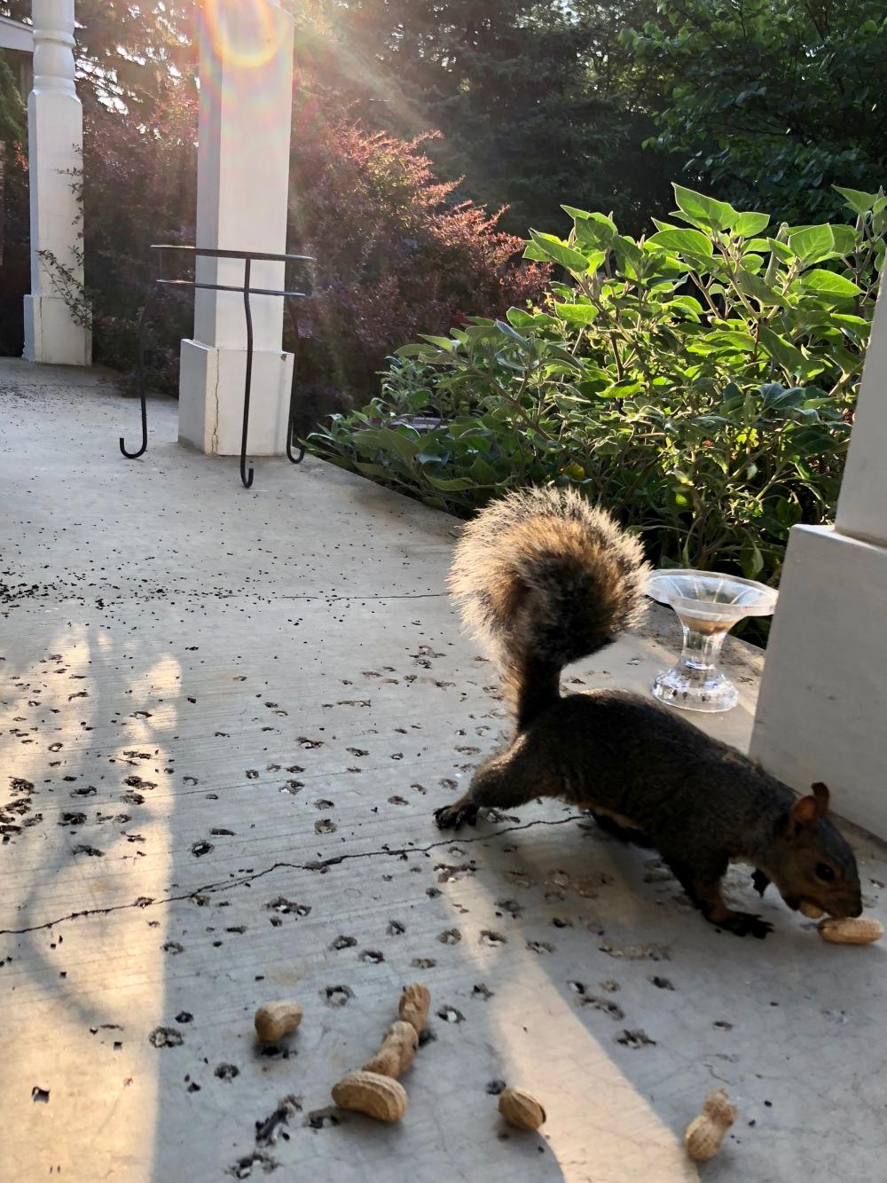Notch the Squirrel 2