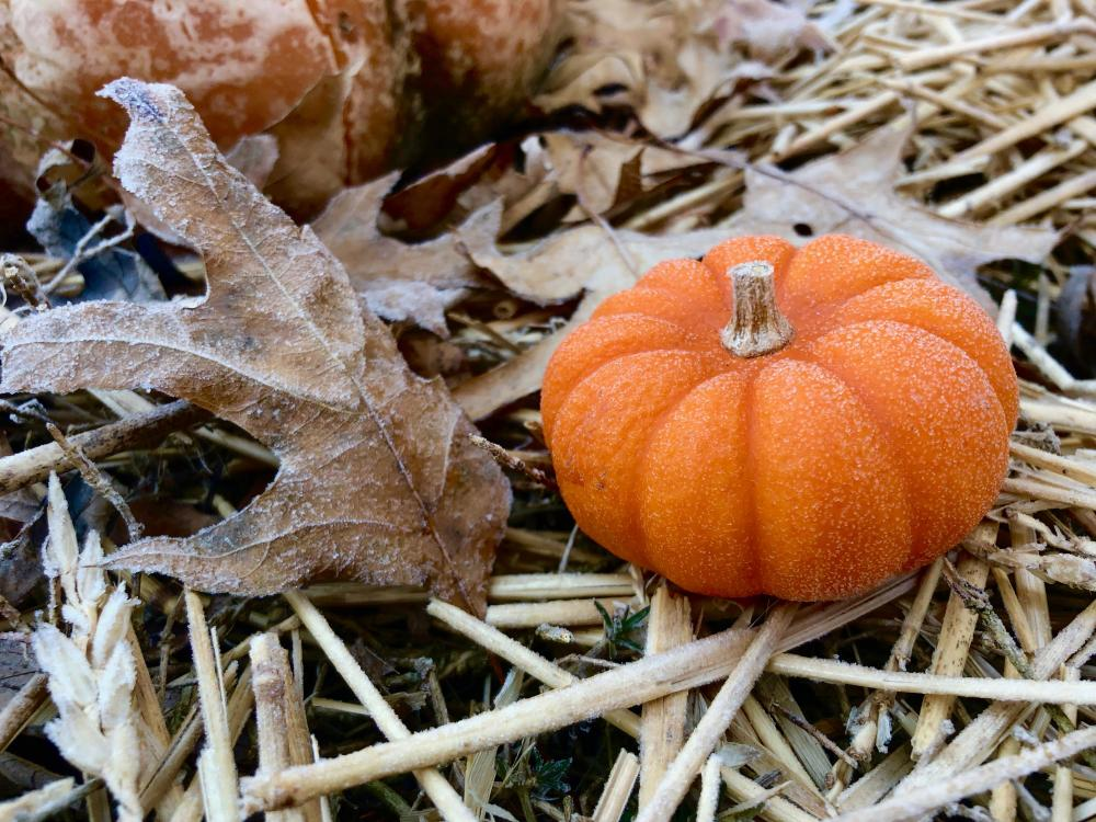 Frosty mini pumpkin