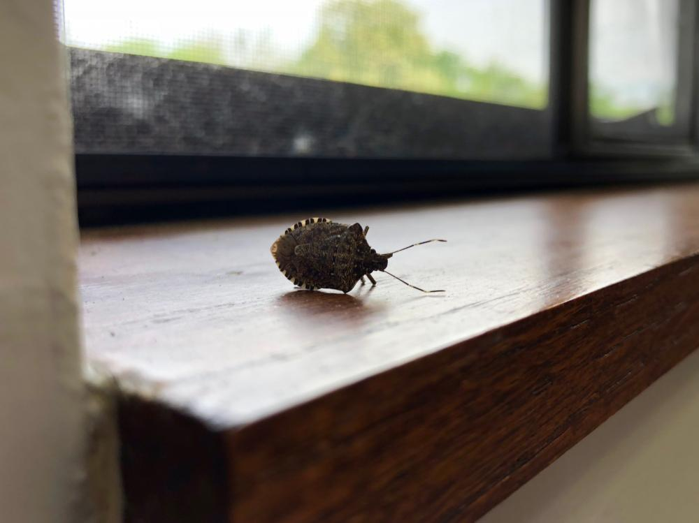 Stink bug having a nap?
