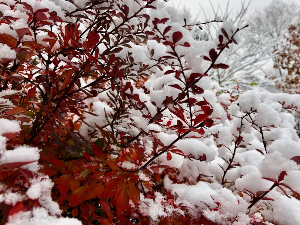 First snow - Fall 2018 - 2