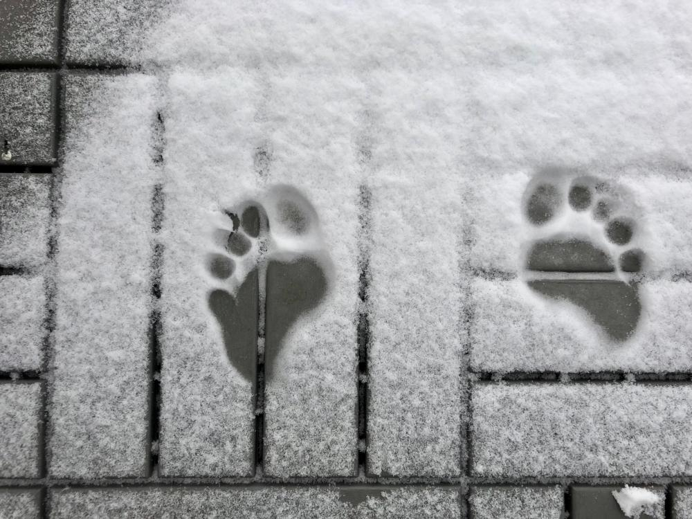 Snow toe prints