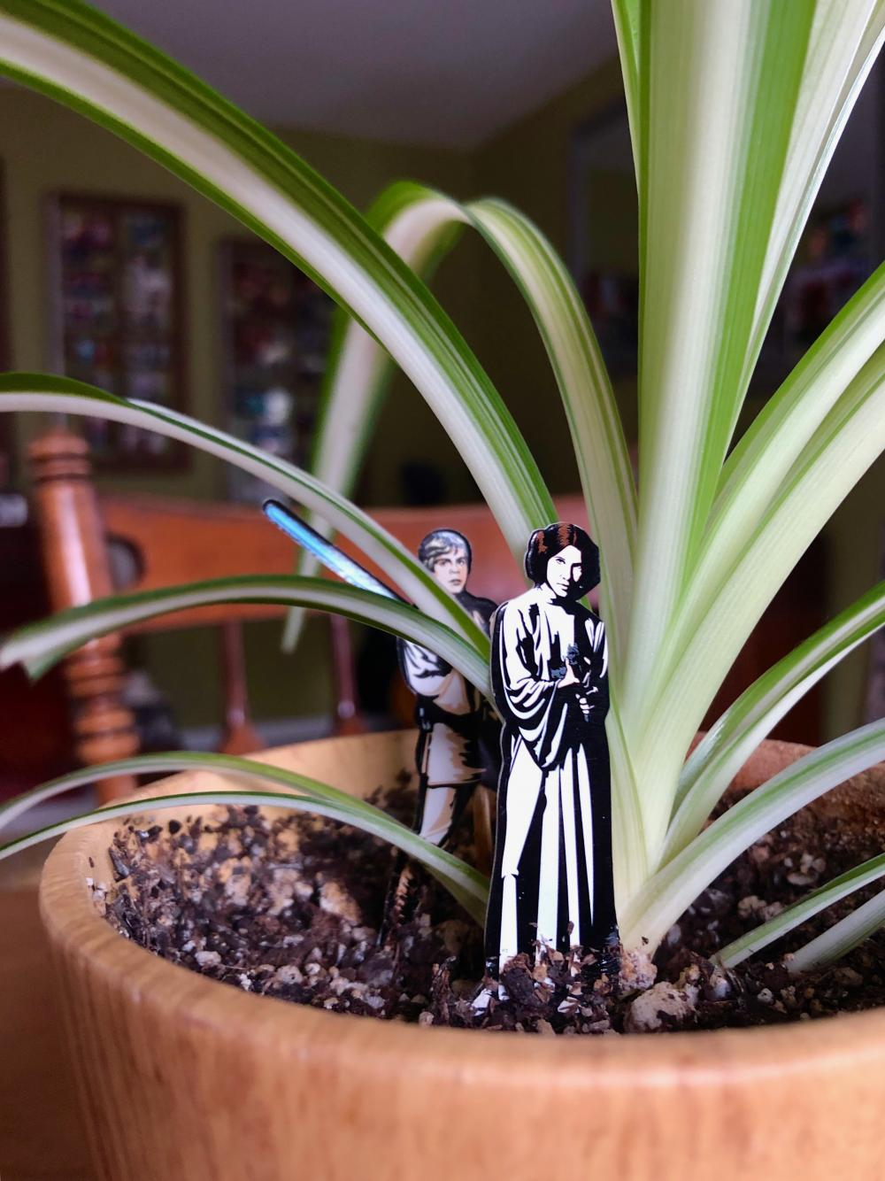 Leia and Luke in the spiderplant