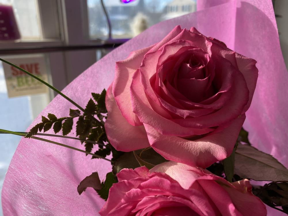 A pink rose for Maggie